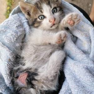 Mała kotka pogryziona przez psa