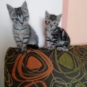 Kruszynka i Okruszek - obydwa znalazły już dom!