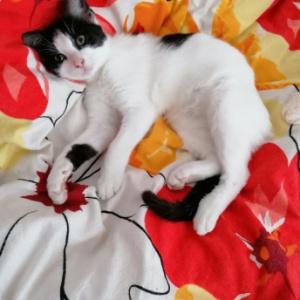 Luna - przecudna koteczka znalazła dom