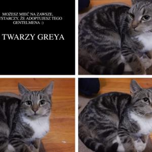 Grey - kocurek zamieszkał w fantastycznym domu!