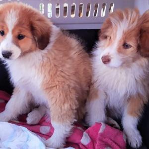 Dwa śliczne szczeniaczki znalazły już domy!