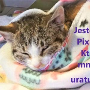 Koteczka Pixie w potrzebie!
