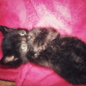 Morelka - ostatnia kotka z ekipy Gremlinków znalazła dom.