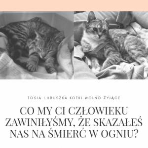 Walczymy o sprawiedliwość - dla kotów, które spłonęły w Ostrowąsie.