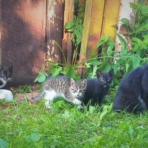 Kocia rodzinka szuka bezpiecznego miejsca