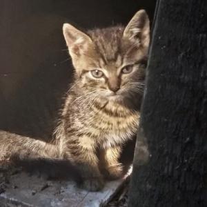 Rodzina kotków z Łeknicy - potrzebne jest bezpieczne miejsce!