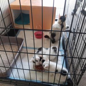 Awaryjnie zabezpieczone kotki z Łąkowej. Mamy mało czasu!