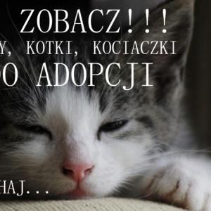 Szukamy im domów! Koty do adopcji.