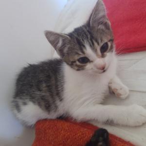 Coca śliczna koteczka do adopcji