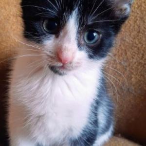 Stempelek - energiczna koteczka jedzie do cudownego domu