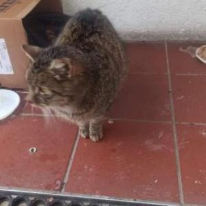 Kolejny kot bezdomny w Starym Chwalimiu