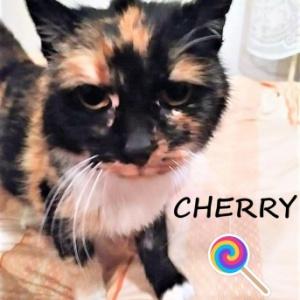 Cherry - znalazła dom!