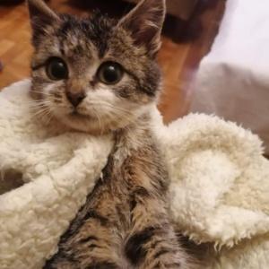 Maszka, koteczka spod Dino w Barwicach