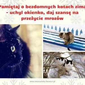Zima, mróz, snieg - zadbaj o zwierzęta!
