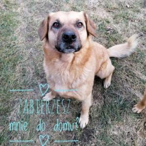 Aron, cudowny, rodzinny psiak szuka domu!