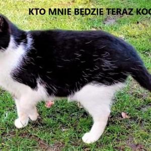 Majka - kotka szuka domu po śmierci właściciela